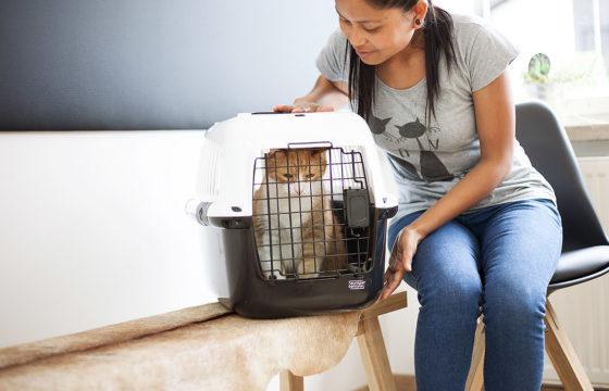 Wartebereich Katze